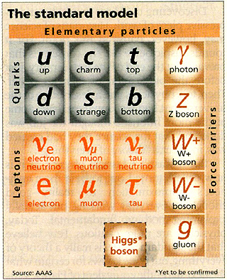 elementary particles in the standard model
